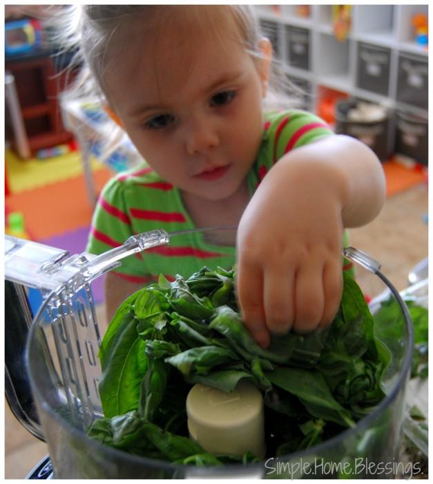 Kids in the Kitchen Basil Pesto in the Food Processor