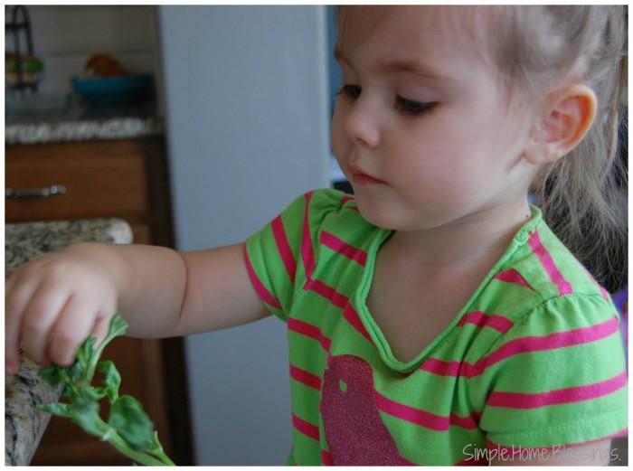 Kids in the Kitchen Basil Pesto preparation