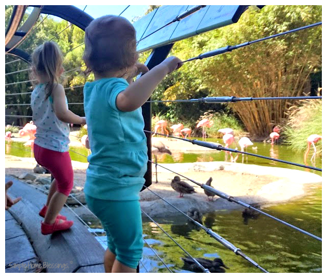 San Diego Zoo - top Southern California destinations for Tots